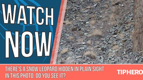 There's a Snow Leopard Hidden in Plain Sight in This Photo. Do You See it?