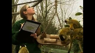 London Zoo Stocktake - Video