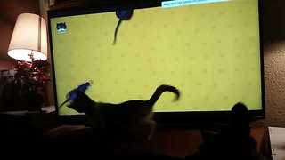 Kitten is Mesmerized by Cartoon Mice on TV Screen - Video