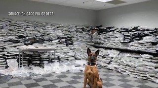 Police dog sniffs out $10M worth of marijuana - Video