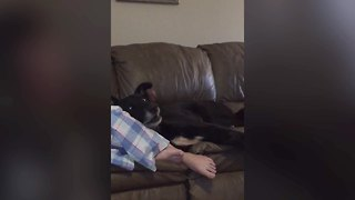 Does This Dog Love or Hate Music? - Video
