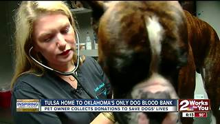 Woman works to save the lives of dogs by running pet blood bank - Video