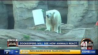 KC zookeepers anticipate solar eclipse - Video