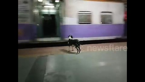 Heartbreaking story of dog which waits night after night for same train