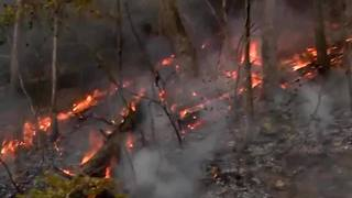 Florida forest rangers helping battle regional wildfires, dry conditions put Tampa Bay at risk - Video