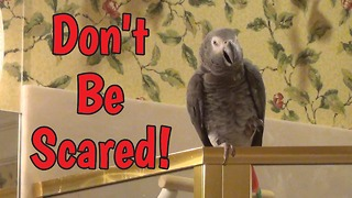 Consoling parrot doesn't want you to be afraid - Video
