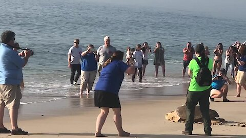 Crowd gathers to watch sea turtle released into the ocean