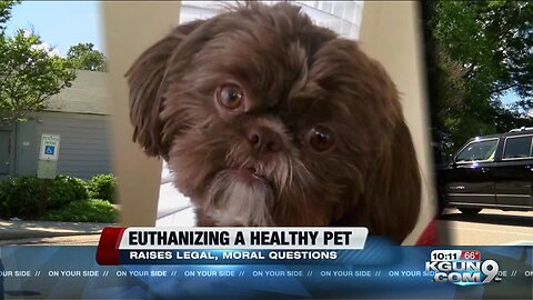 The legal and moral issues of euthanizing a healthy pet