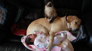 Puppy, Kitten And Baby Preciously Cuddle Together