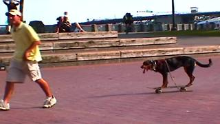 Dog steals skateboard, rides it himself - Video