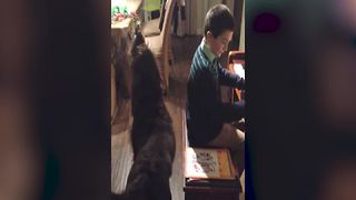 Young Boy Plays The Piano And Cute Dog Howls Along - Video
