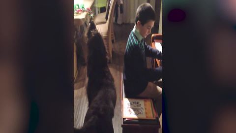 Young Boy Plays The Piano And Cute Dog Howls Along