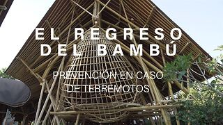 El regreso del bambú - Video