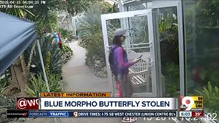 Police looking for butterfly bandit