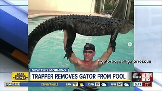 Nearly 9-foot alligator pulled from Florida pool