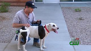 A man was reunited with his dog six months after running away