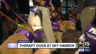 Airport puppies looking to ease your traveling anxieties at Phoenix airport - Video