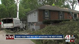 Signs your tree may not withstand a storm - Video