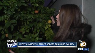 Protect pets, plants and pipes during frost advisory