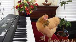 This Chicken Is More Musically Gifted Than You - Video