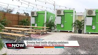 Growing food inside shipping containers - Video