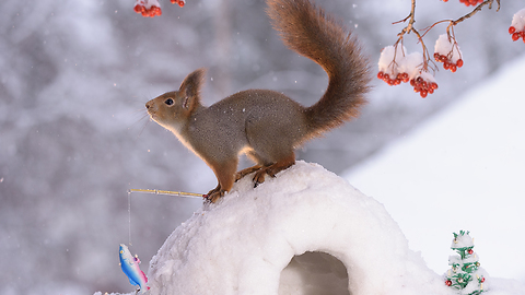 squirrel at the north pole
