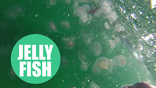 Video shows thousands of jellyfish in British waters
