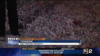 Some waking up to icy roads, sidewalks - Video