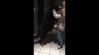 Bernese Mountain Dog Goes Wild When Grandma Visits - Video