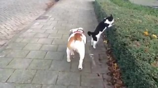 Dog & cat compete for who's first during walk - Video