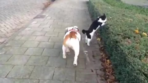 Dog & cat compete for who's first during walk