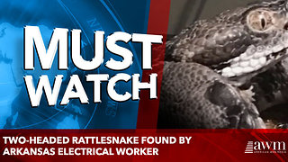 Two-headed rattlesnake found by Arkansas electrical worker - Video