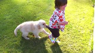 Puppy Dog Pulls On A Tot Girl's Pants While She Walks Around