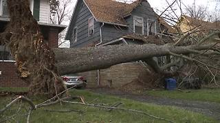 Massive tree knocked down in Cleveland - Video
