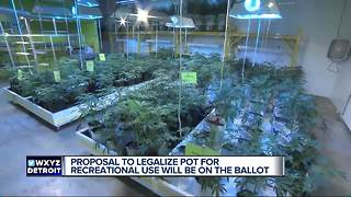 Voters will decide on recreational marijuana legalization in November - Video