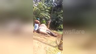 Gruesome traditional torture of elephants triggers outcry - Video