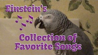 Parrot Sings Collection of His Favorite Songs - Video