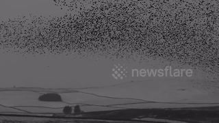 Starling murmuration over snowy Cumbria hills - Video