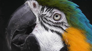 Parrot Has Got Some Moves  - Video