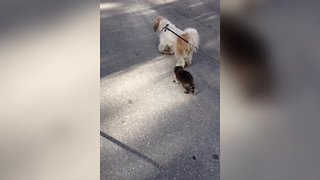 Dog and Raccoon Hang out