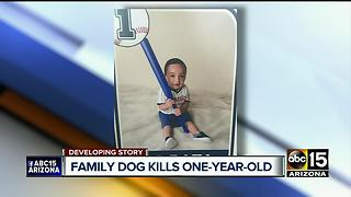 Dog attacks baby boy, drags him outside before killing him - Video