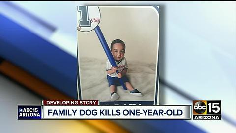 Dog attacks baby boy, drags him outside before killing him