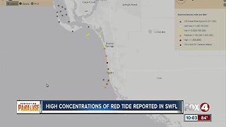 High concentrations of red tide reported in SWFL