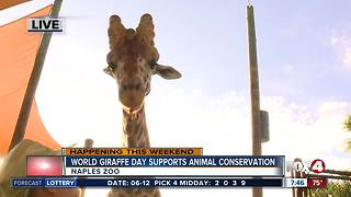 Naples Zoo celebrates World Giraffe Day - 7:30am live report - Video