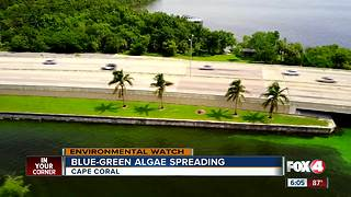 Green algae is spreading into parts of Cape Coral - Video