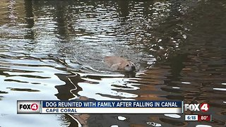 Dog reunited with family after falling in Cape Coral canal