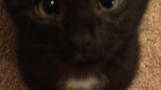 Crazy Kittens attack!!!  - Video