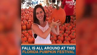 Celebrate fall at this Florida pumpkin festival in Bradenton | Taste and See Tampa Bay - Video