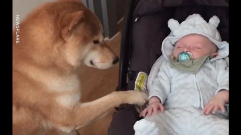 Adorable Dog Rocking Baby In Chair