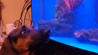 Aquarium glass the only thing separating playful dog and fish